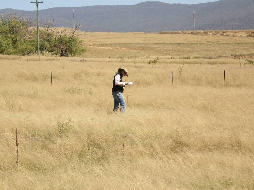 A woman stands in a field of brown weeds.