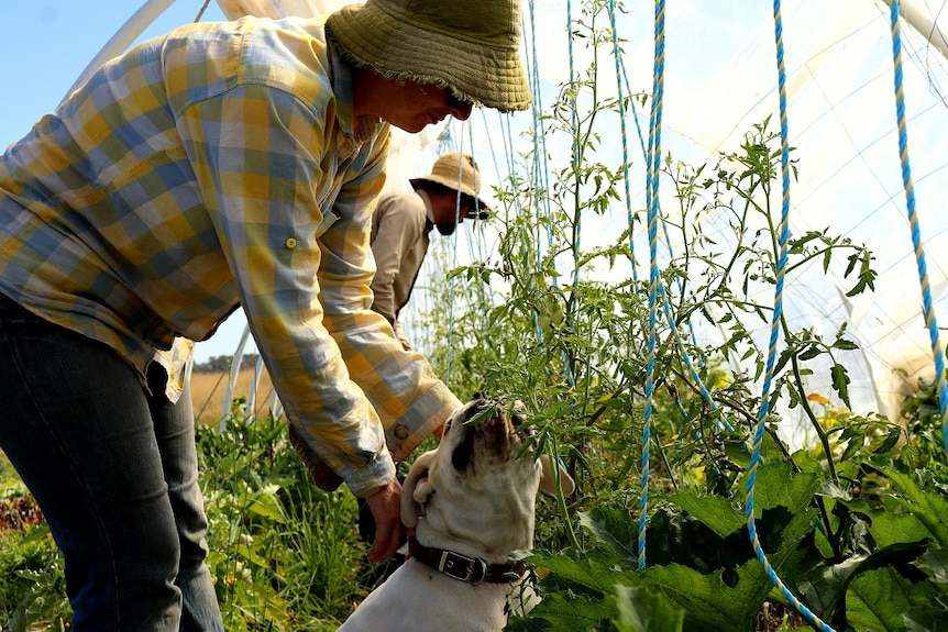 Brian and Tara Lee Joyce are growing veggies to feed 250 families off less than a hectare