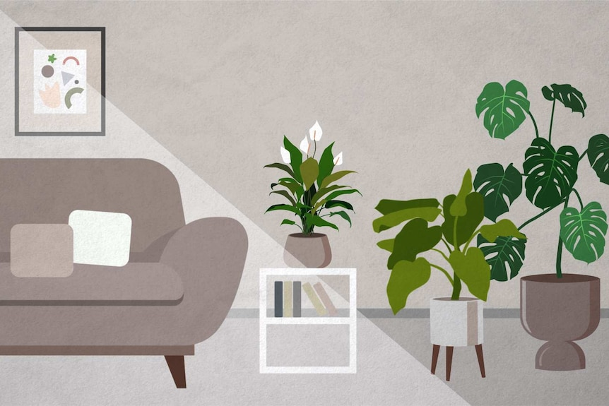 An illustration of indirect sunlight in a loungeroom, with sunlight barely reaching plants placed away from the window.