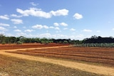 The research project at Coastal Plains Horticulture Research Centre has seen 27 varieties of bananas planted looking for signs of tolerance or resistance to Panama Disease.