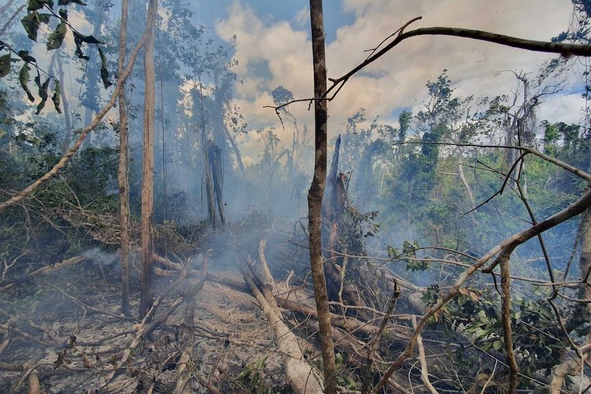 Smoke and damaged trees in Iron Range rainforest.