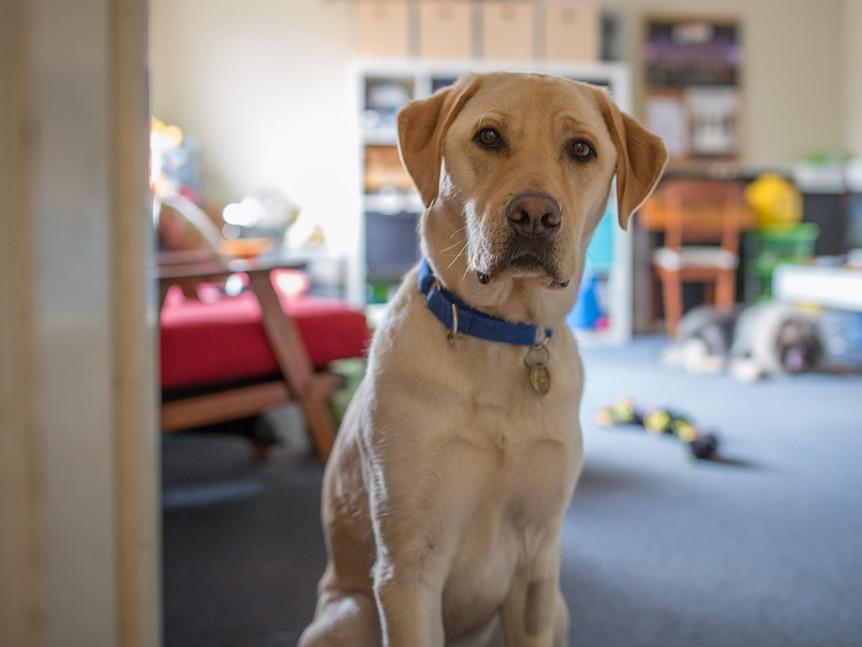 PTSD assistance dog Jimmy