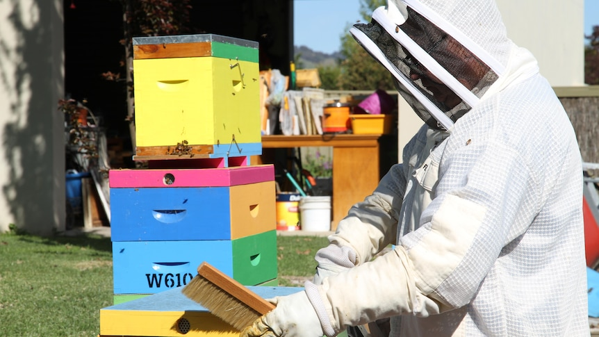 A man in a bee suit brushing out bee boxes that are painted bright yellow, pink, blue, green and orange.
