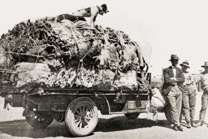 A black and white image of koala skins on a truck.
