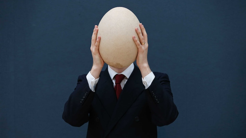 A pre-17th century, sub-fossilised Elephant Bird egg