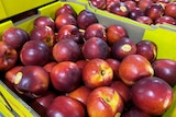 Nectarines in a box.