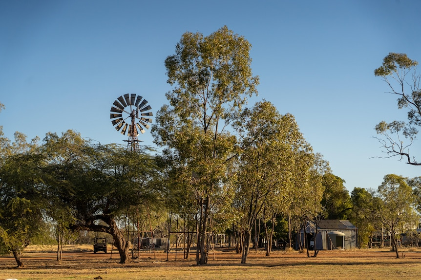 A windmill stands amongst trees.