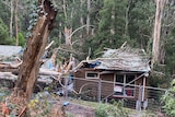 A house with damaged roof surrounded by uprooted trees.