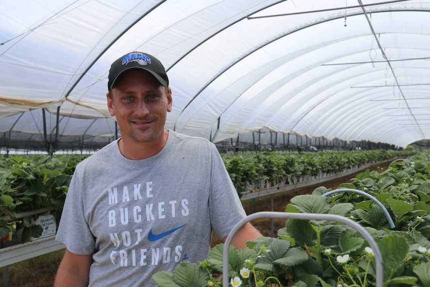 Applethorpe farmer Nathan Boronio standing under a greenhouse filled with strawberries.
