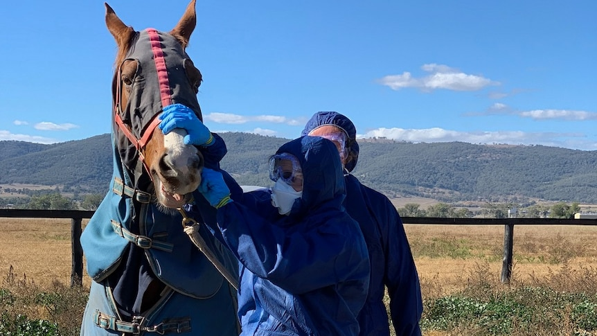 Two people fully covered in protective clothing inspect a horse with covers over its body