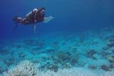 Curtin Aquatic Laboratory divers