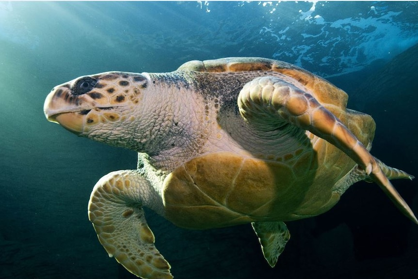 Close up image of turtle under water