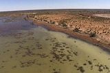 A TV still of the wetlands of the Paroo River in flood - the last free flowing river left in the Mur