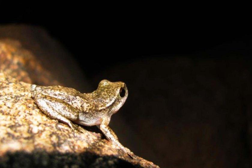 A mottled brown frog on a rock