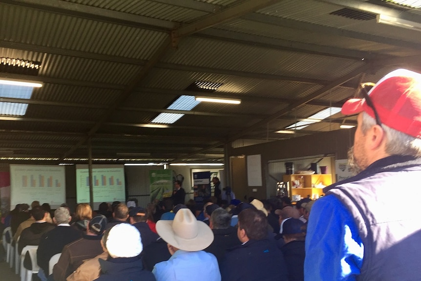 A crowd of grain growers sit in a shed, watching presentations from NSW DPI and researchers.