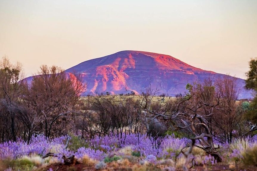 Wildflowers at the base of a mountain at sunrise.