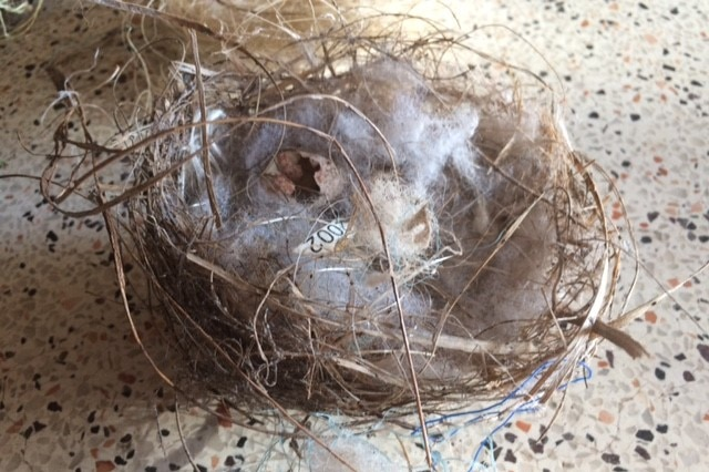 A bird's nest with fake spider webs in it