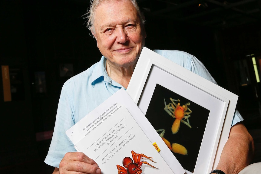 David Attenborough with a photograph of the prethopalpus attenboroughi spider