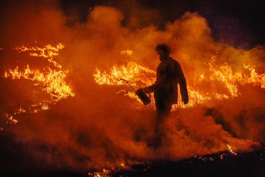 A firefighter with a can conducts backburning- he is a silhouette as a bushfire burns behind him.