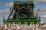 A cotton harvester is harvesting a cotton crop in Southern Queensland.