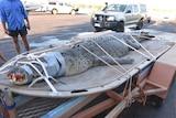 Crocodile tied down on a trailer