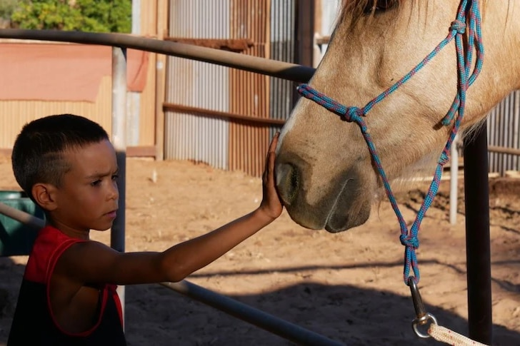 An Indigenous child pats a horse in Broome as part of an Equine Assisted Learning program.