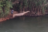 An fisherman casts a net into the Katherine River