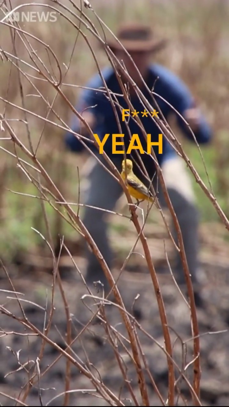 Still frame of yellow bird on branch with man blurred in background doing thumbs up and F*** Yeah written in yellow.