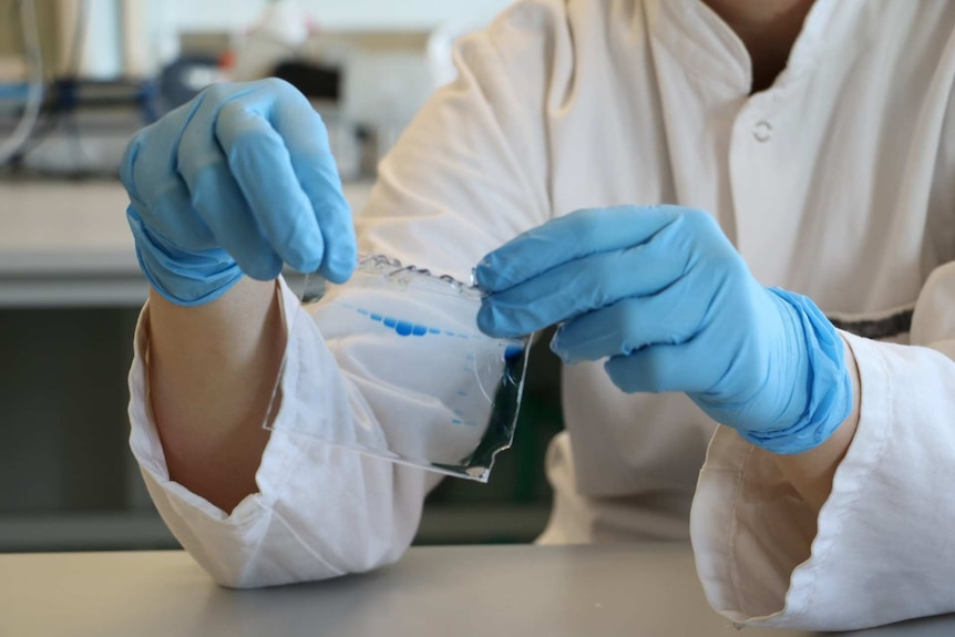 gloved hands looking at a protein sample in a lab