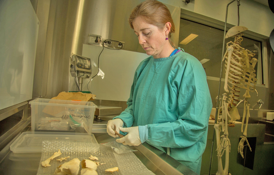 A woman in a green coat stands at a bench in a lab with bones in front of her