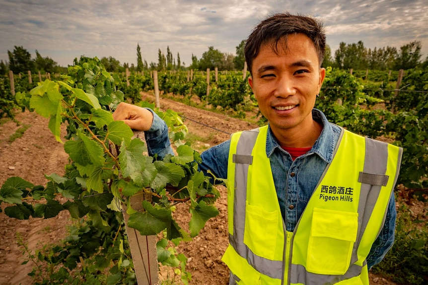 Pigeon Hills' chief winemaker, Liao Zusong, standing amongst vines in Ningxia