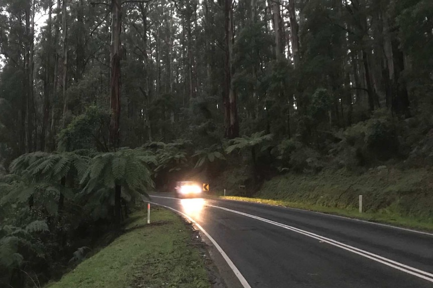 A car with its headlights on drives on a road with dense forest on either side.