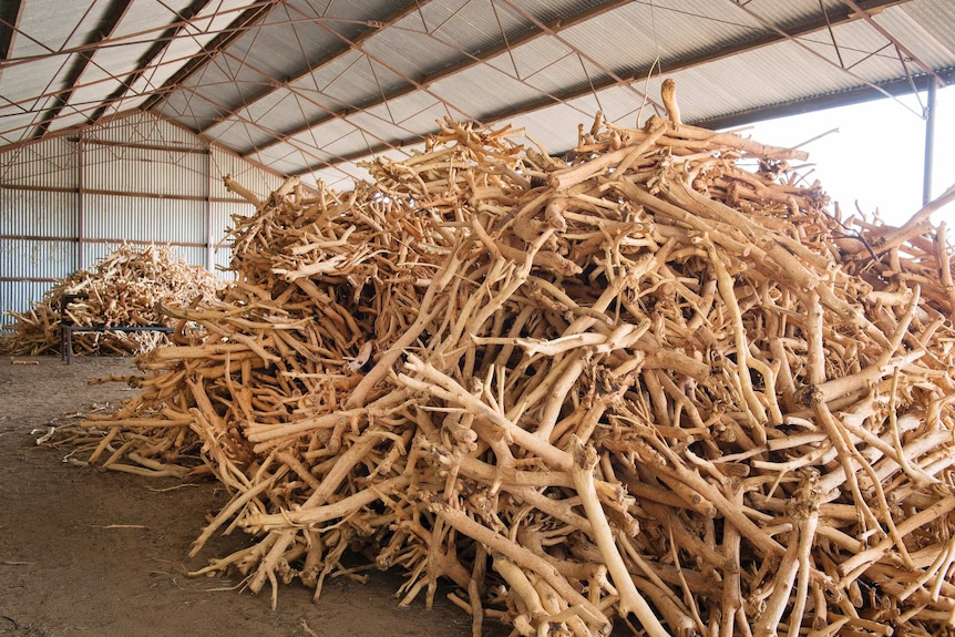 Piles of sandalwood in a shed