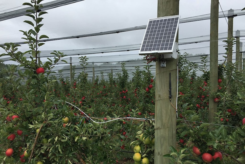 Keeping fruit fly out of orchards