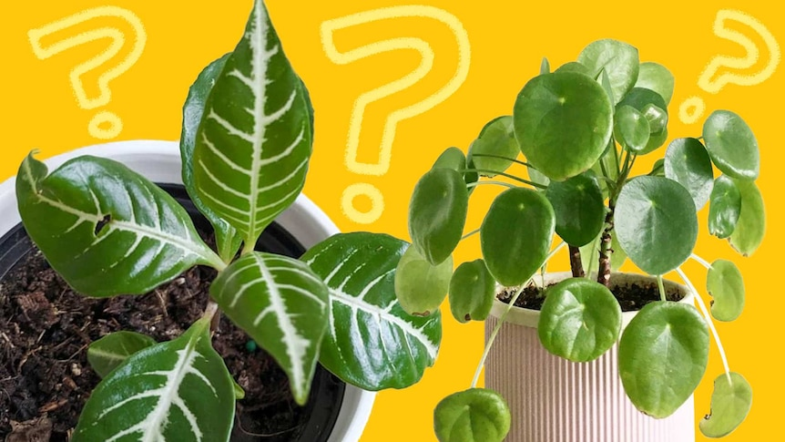 Lush potted indoor plants for a quiz about how well you know indoor plants.
