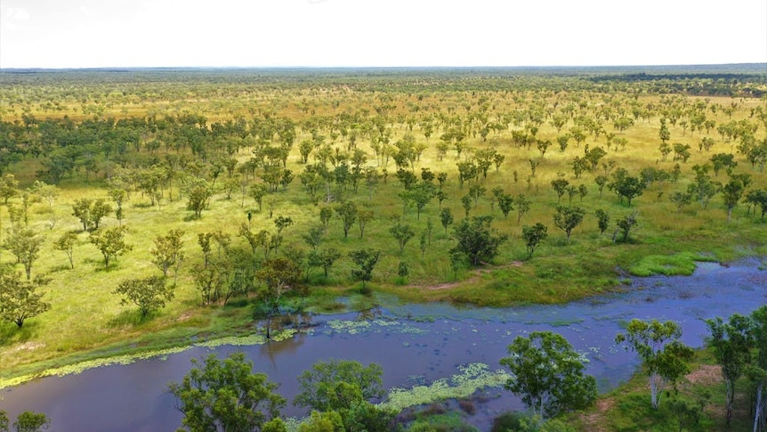 a drone shot of a billabong with some slightly-wooded scrub.