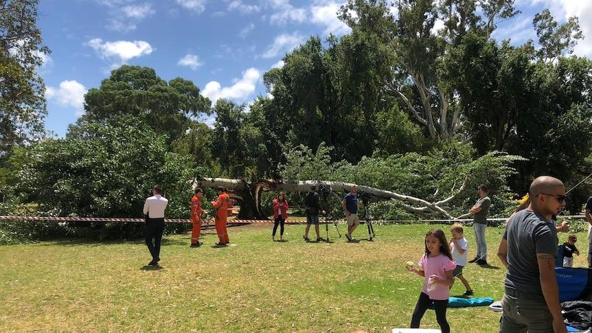 A tree split in half at Tusmore.