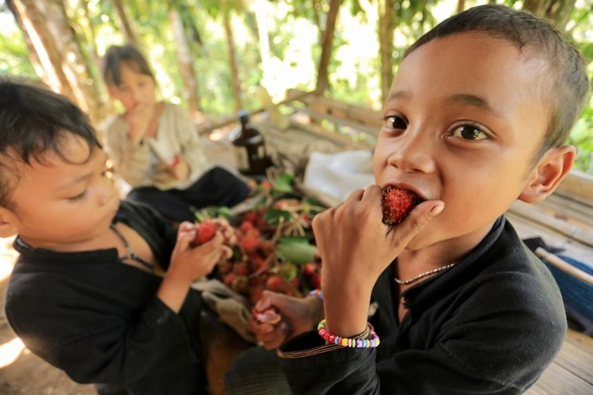 Two kids eating fruits know as rambutan in bahasa Indonesia