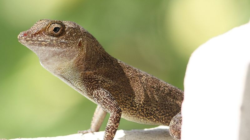 A close-up of a lizard sitting on a wall.