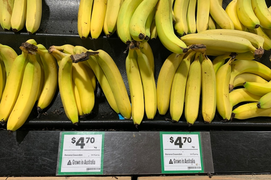 bananas in shop