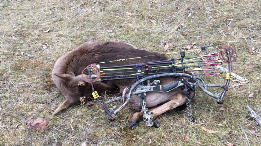 Hunting Tasmania advertises on Facebook, saying it caters for deer trophy and meat hunters.
