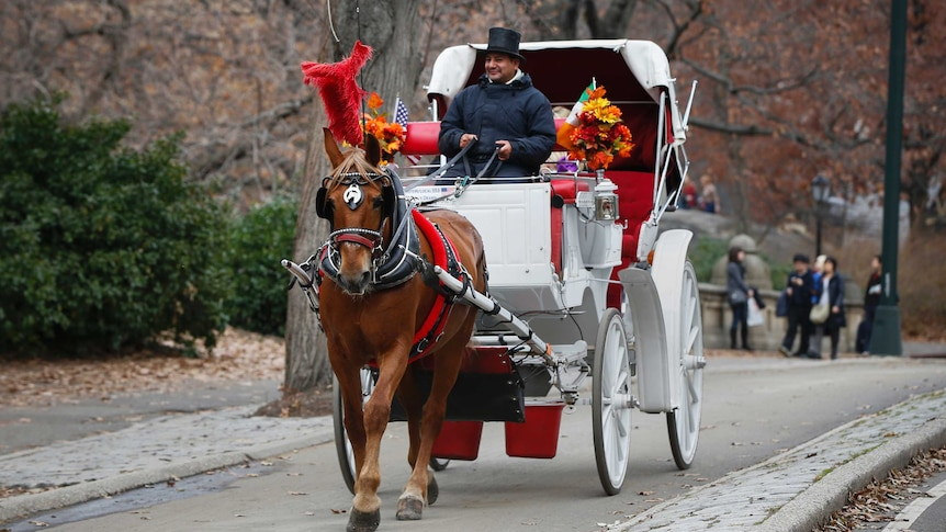 Horse-drawn carriage driven in New York.