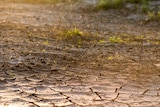 Dry and cracked earth.