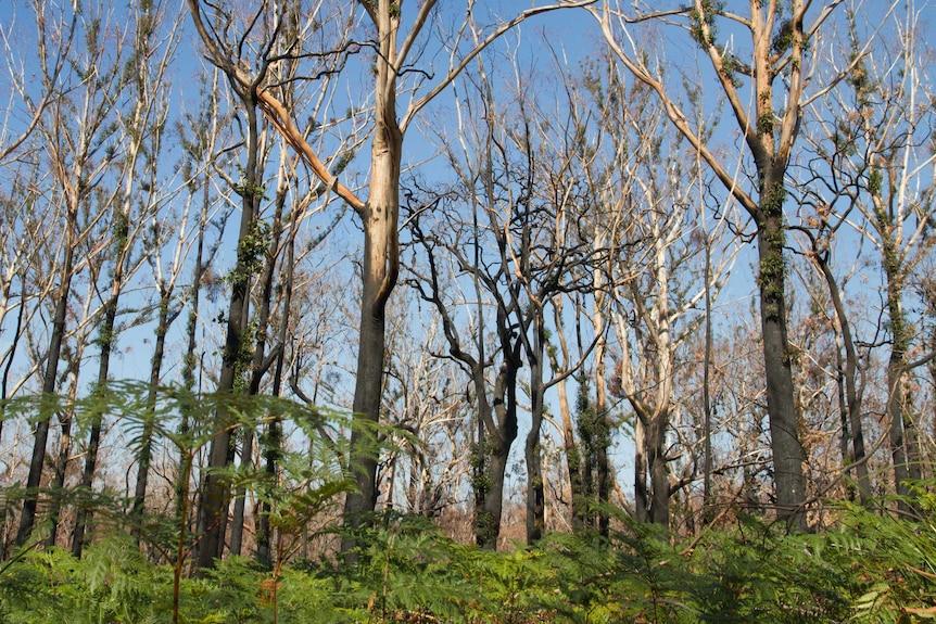 Bracken surrounding burnt trees