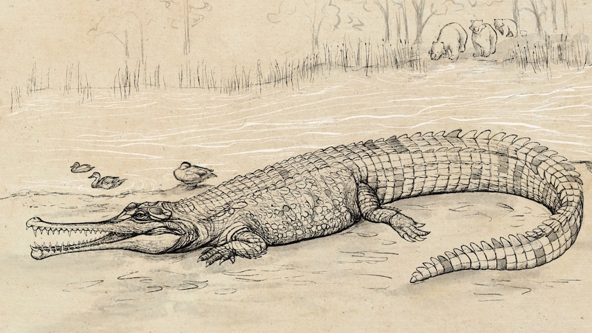 'One hell of a big crocodile': Mystery skull belongs to 'River Boss', researchers confirm