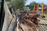 A gum tree has crushed a black fence as it fell into a tanbarked playground full of brightly coloured play equipment.