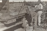 Two men loading wine grapes on a truck.