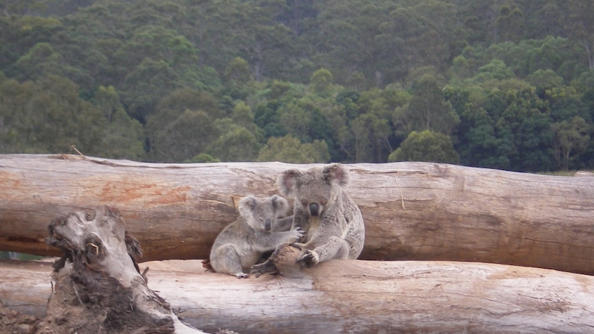 Shrinking habitat, pests, climate change listed as greatest threats to Australia's most endangered species