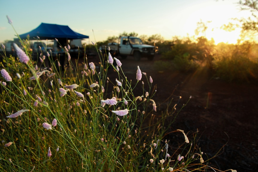 Flowers in front of a desert camp.