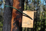 A close up of the Wildbnb box strapped to a tree with rubber hose to protect the trunk